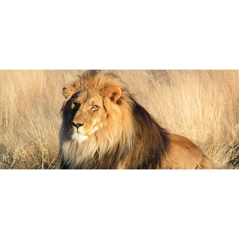 Durban-Safari-Tours-by-Tim-Brown-Tours-1
